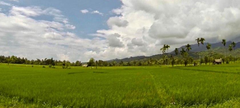 Paid-fields in Lombok